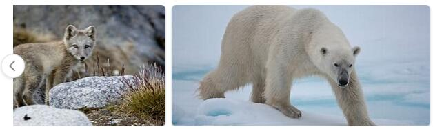 Greenland Wildlife 2
